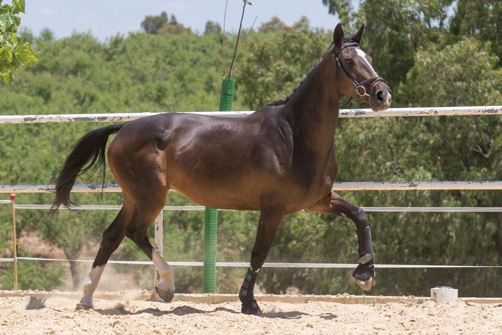 Cingara (12)