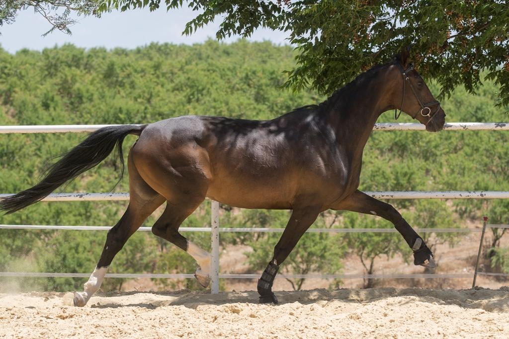 Cingara (9)